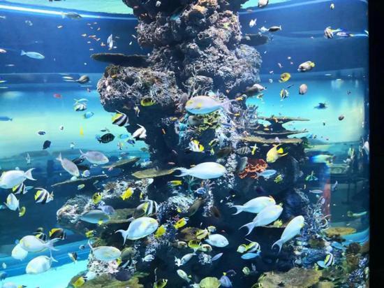 鱼类的记忆只有7秒?你可能都比不上它全基因组鱼7秒