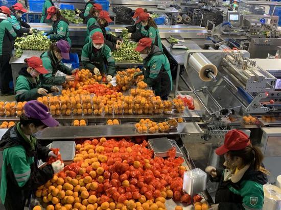 共享员工在叮咚买菜的松江大仓库里挑拣水果。