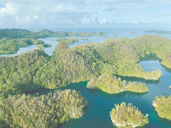 新几内亚的低地雨林 Charlie Heatubun摄