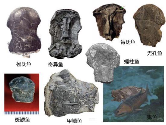 ▲各種魚類的化石(圖片由朱敏提供)