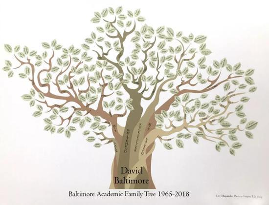 巴尔的摩教授的学术家谱——图中每片树叶都是巴尔的摩教授的一位学生 图片来源:David Baltimore