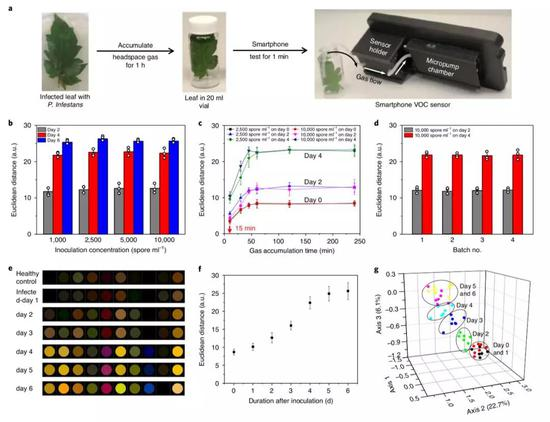 智能手機VOC傳感器檢測致病疫黴感染番茄葉的實戰結果。(圖片來源:Nature Plants)