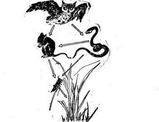 一個和老鼠有關的食物鏈(圖片來源:www.qyls0763.com)