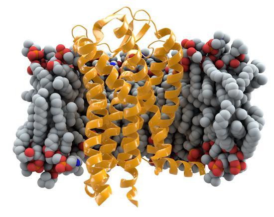 细胞膜表面CCR5受体蛋白,作者:Thomas Splettstoesser
