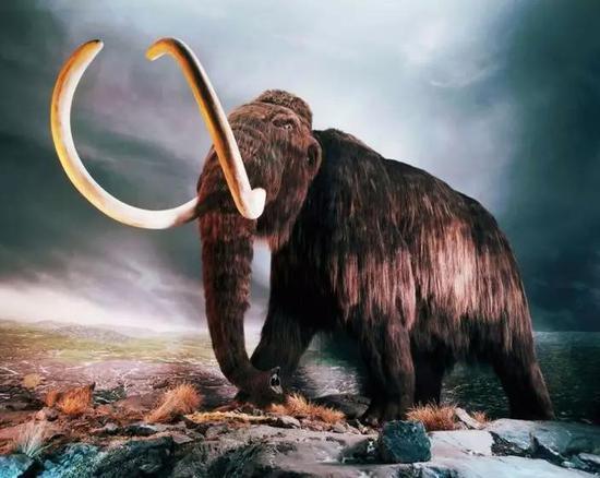 猛犸象复原图 (图片来源:化石网)