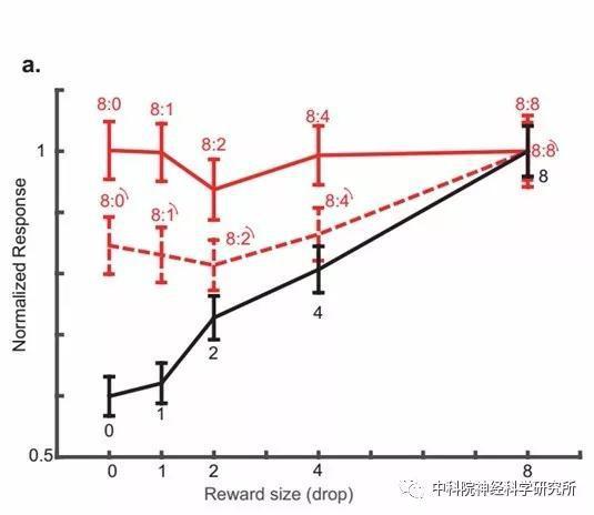 图3眶额叶皮层中的价值编码神经元在大脑同时处理代表不同价值的物体时,主要由更高价值的物体支配。这一过程受注意力调控,眶额叶神经元因受注意力切换影响编码相关物体的价值。图中虚线代表转动情况下神经元的反应,相比没有转动的情况(红色实线),神经元整体反应更偏向于被转动的图片(黑色实线)。