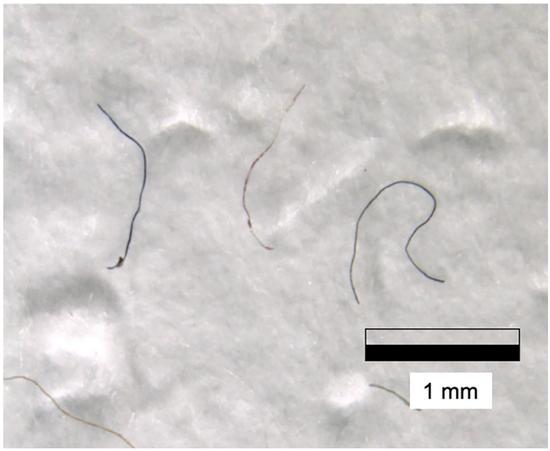 样品中的微塑料纤维