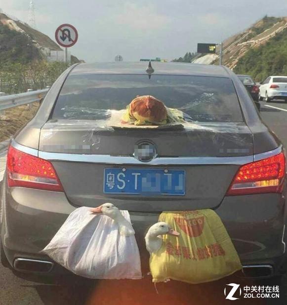 """春节返程高峰 """"两鸭一鸡""""上高速成网红"""