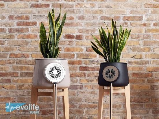 借助盆栽植物呼吸 Clairy表示绿色的空气净化器更有说服力