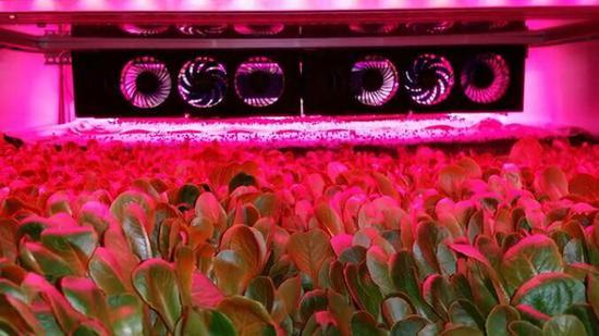 促进植物发育 这款低功耗生长灯没谁了