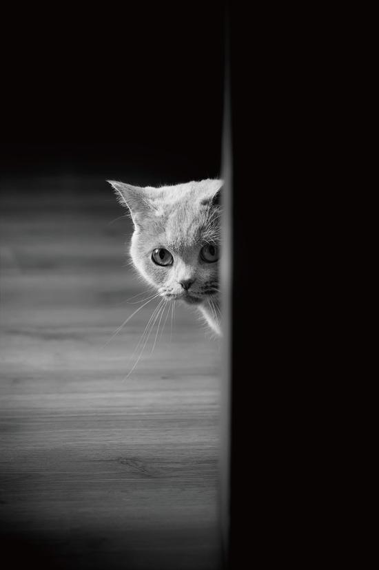 用光角度简单了解动物摄影中常用到的光线知识|拍摄
