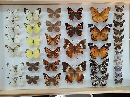 上海动物园昆虫 朱建青 图