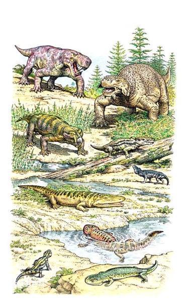 二叠纪时期的生物