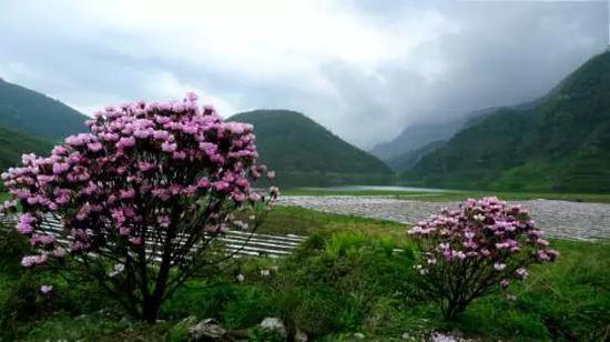 """大瓦山湿地小天池""""这是世间最具魔力的天然公园"""",摄影:榕嘉"""