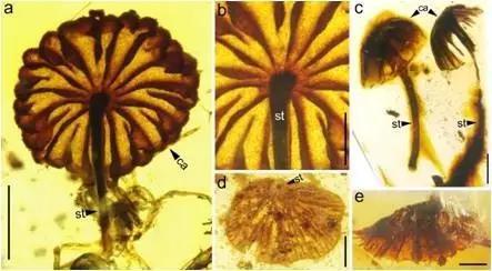 都说岁月是把杀猪刀,然而亿年前的蘑菇和今天的蘑菇长得依然那么相像~