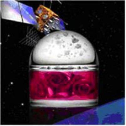 图13 太空玫瑰产生新的芳香化合物