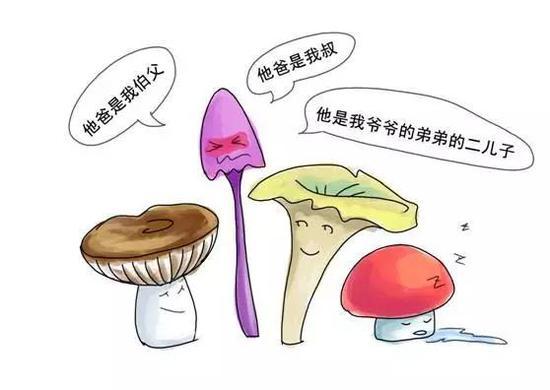 那时候的蘑菇,种类也很丰富呐~