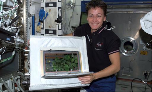"""图8 国际空间站""""先进空间栽培""""实验"""