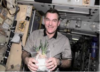 图5 国际空间站生长的洋葱