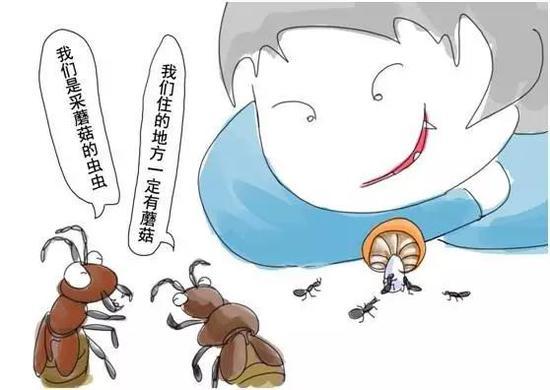 吃蘑菇的虫虫