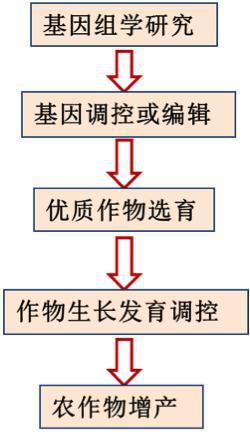 图16 通过基因研究改进农业生产
