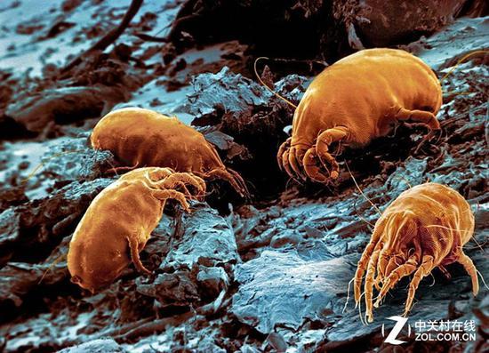 如果不经常清理 我们的床上就会聚集数量巨大的螨虫
