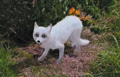 《古剑奇谭》小狐狸