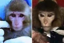 伊朗宣称的航天猴上天前后相貌有些不同