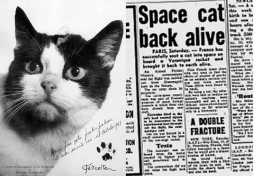 带有Félicette爪印的照片和它航天生还的报纸新闻报道