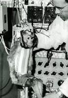 第一只进入外太空的太空猴:阿尔伯特二号