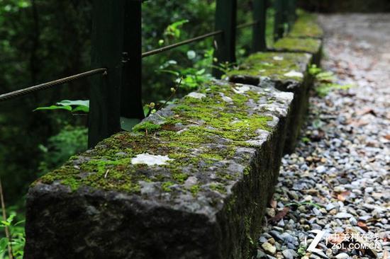 潮湿天气中 连路边的石头上都会长出青苔