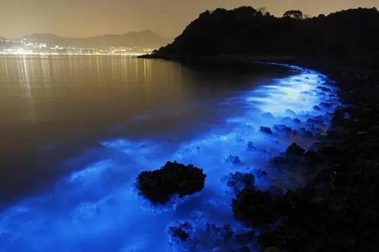 海洋中发光的生物有很多,图为2015年1月22日在香港拍摄到的夜光藻(Noctiluca scintillans),这种藻类之所以能发光,是因为其体内数以千计的球状胞器中,具有萤光素-萤光素酶,这些胞器就像微型的电源供应器,让夜光藻在感受到周遭环境的变化时发出萤光。图源:The Atlantic