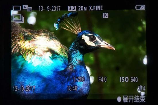 约235万像素的XGA OLED Tru-Finder电子取景器显示效果非常惊艳