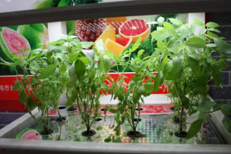 新型LED照明植物