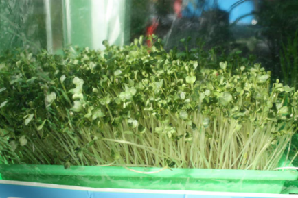 无土、无肥料、免营养液的纸上种植