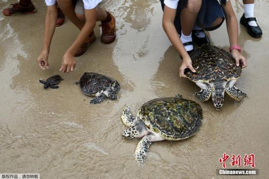 资料图:海龟