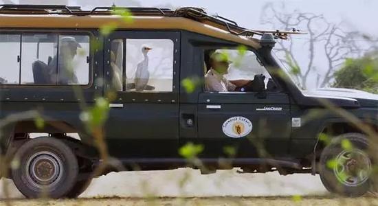 白鹭特工唯一一次被攻击,是一头兴奋的母象朝它丢了一大坨泥巴…