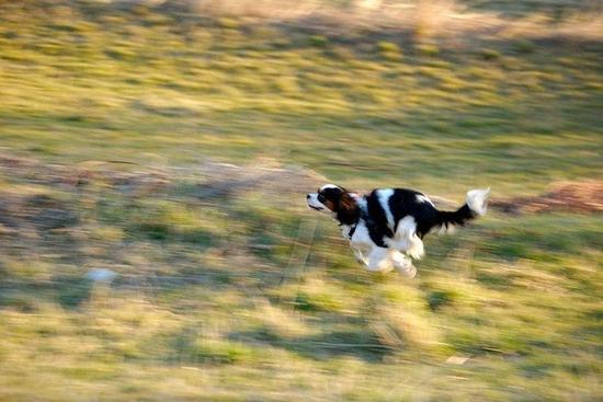 即使是拍摄狗狗也可以运用 慢快门 + 追踪技巧!(Photo by Luca Montanari)