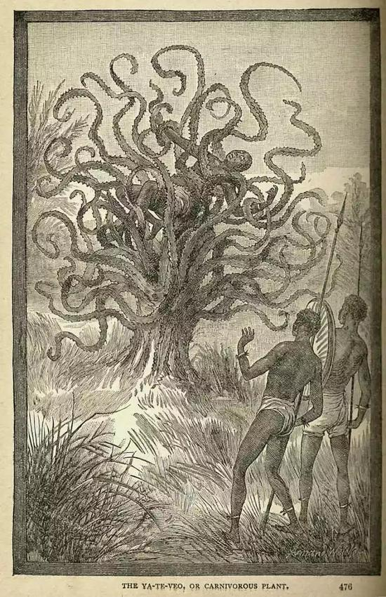 J·W·比尔笔下的嗜血植物。图源:Wikimedia
