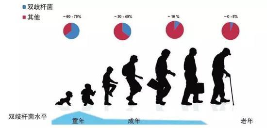 双歧杆菌在各年龄段人体中的水平