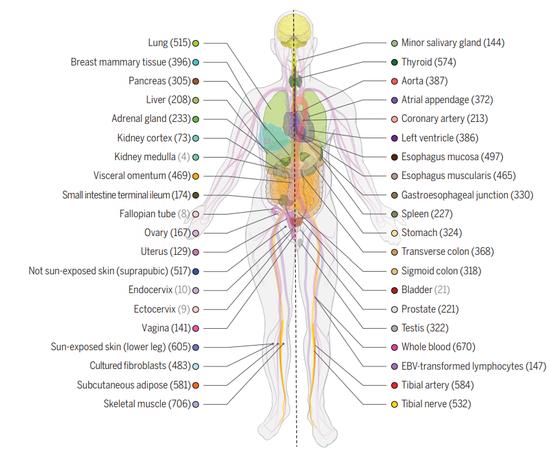 15篇论文齐发!《科学》封面报道人类遗传学新纪元