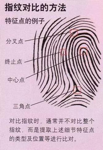 指纹对比法