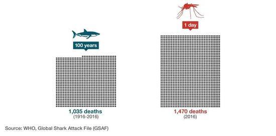 蚊子每天造成的死亡人数比鲨鱼100年来杀死的人还要多(数据来源:WHO,Global Shark Attack File)