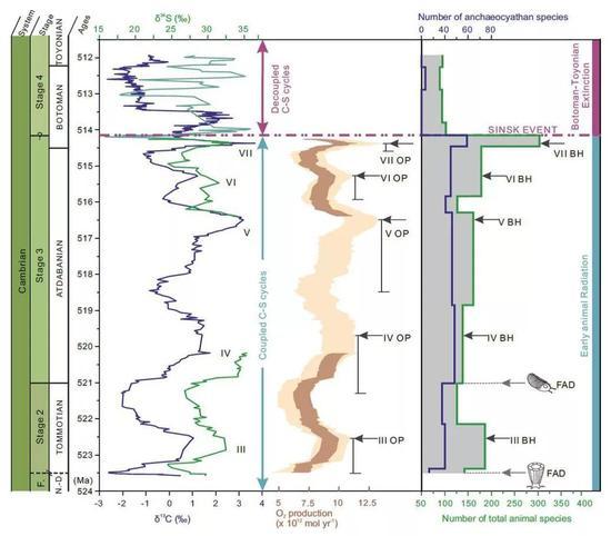 西伯利亞寒武紀早期碳、硫同位素和氧氣生產量變化與動物多樣性之間的關係,說明該時期生物多樣性與氧氣含量同步變化(圖片來源:南京古生物所)