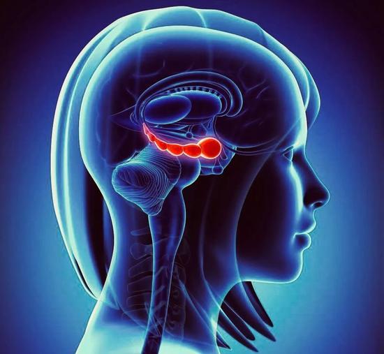 而阿尔兹海默病患者的主要症状之一就是记忆力衰退,对海马体的研究