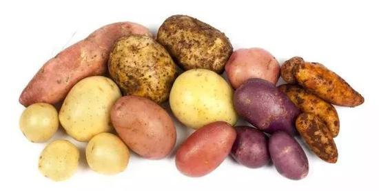 图3 马铃薯