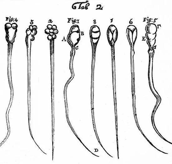 这个标本图掀起轩然大波,此前科学界一致认为精子里有小人。