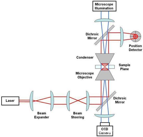 来源:公有领域 △光镊系统示意图,红色代表控制光路,蓝色代表照明光路,操纵室位于中间,最右侧代表位置测量装置