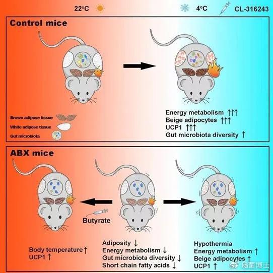 UCP11基因參與了體溫調節(圖片來自:參考資料7)