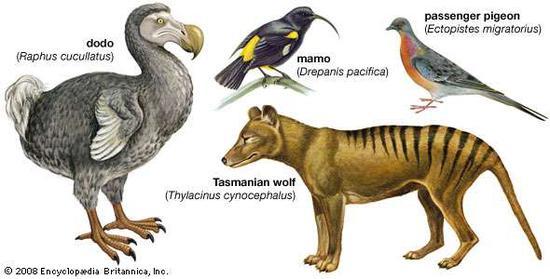 """▲因为人类影响而灭绝的动物,成为了复活的""""明星""""物种。(来源:Encyclopedia Britannica)"""